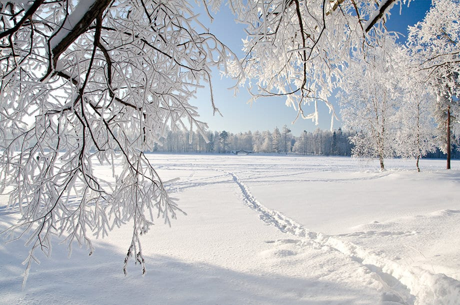 A photo of snow-covered branches, trees and a field.