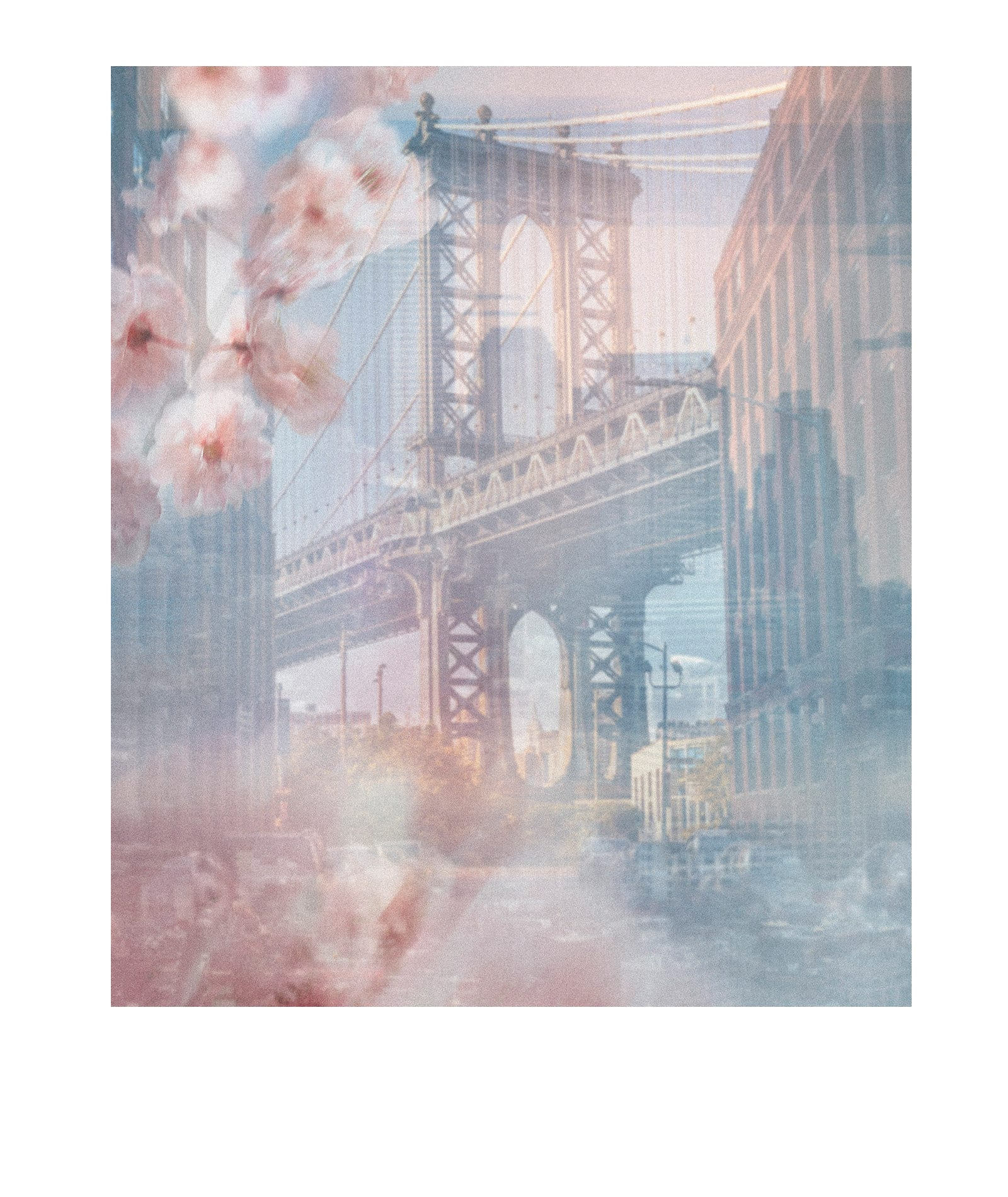 Un collage photo superpose des fleurs de cerisier floues sur une photo couleur du pont de Brooklyn.