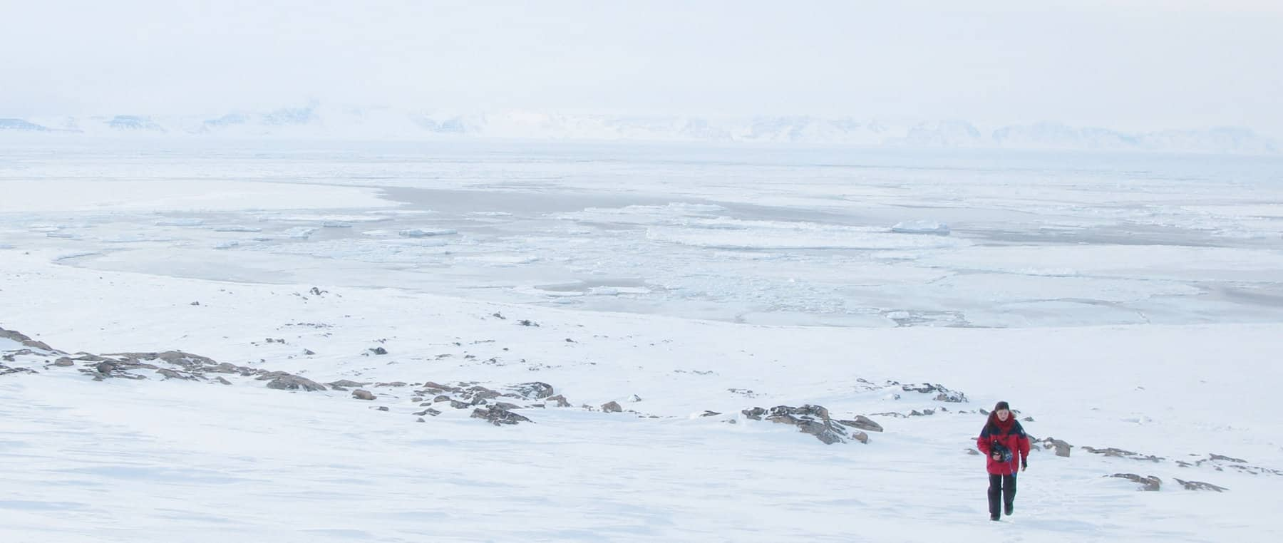 A color photo shows Dr. Thea Bechshoft walking in a a snow-covered Arctic landscape wearing a red parka.