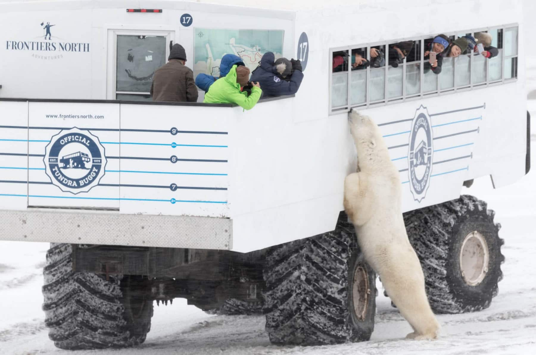 A polar bear stands up to lean against a large truck filled with people looking out the vehicle's windows. The truck is in a snowy landscape.