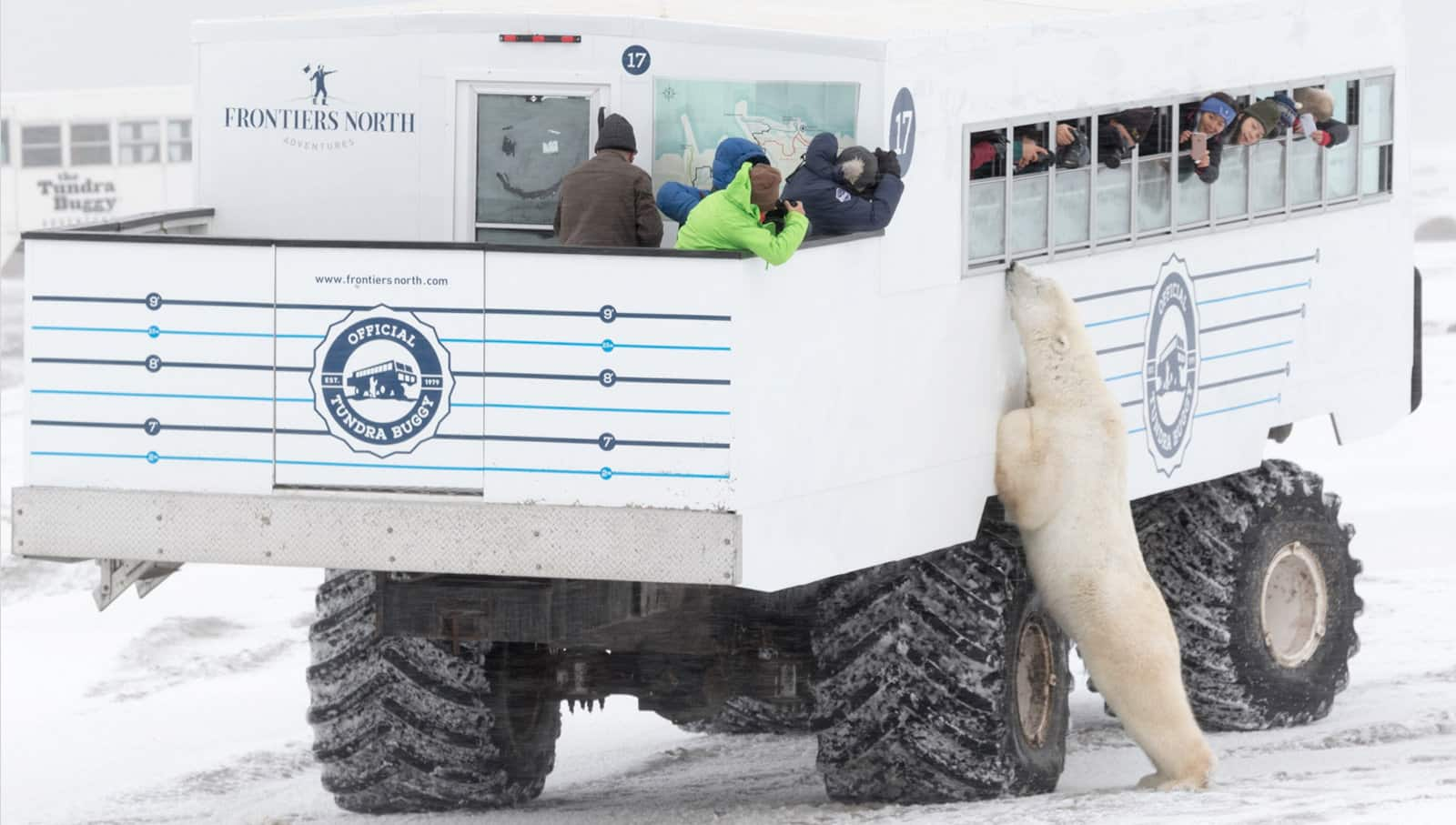 A color photograph of the Official Tundra Buggy with people photographing and looking at a polar bear who is leaning against the side of the vehicle.
